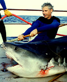 tiger_shark.jpg (22849 bytes)